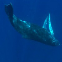 "Video Clip ""Where in the World are the Whales"", song by Steve Grimes"